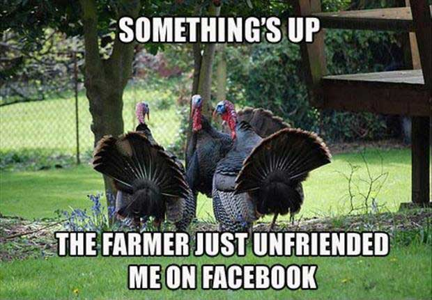 Funny Thanksgiving Memes